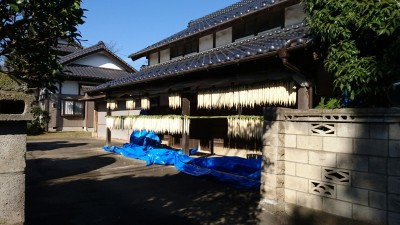 Daikon just put out in the sun (December 10, 2017) in Karima, Tsukuba