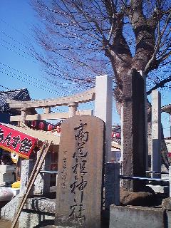 The entrance to the Takasai Jinja Shrine is marked by a stone tablet, a stone torii gate- and an ancient zelkova (keyaki) tree