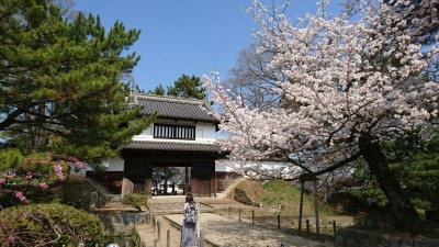 Cherry blossoms in front of the ruins of the old Tsuchiura Castle (Kijo Castle)