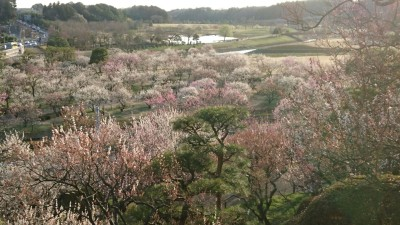 A view of the low-lands beneath Mito`s Kairakuen Garden