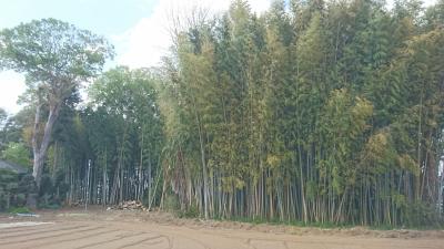Bamboo grove in Tsukuba.
