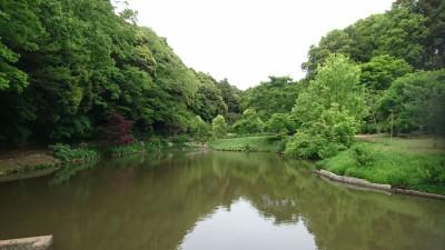 Fresh greenery at the Tokyo Peony Garden in Tsukuba