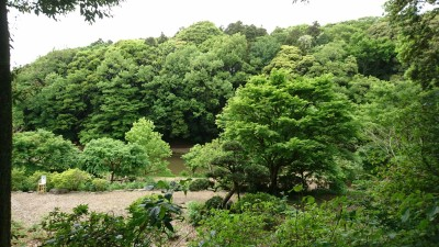 Fresh greenery at the peony garden - this was the site of the former Ushiku Castle.