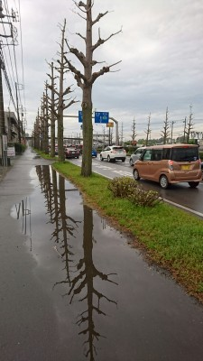 The Tsuchiura-Gakuen Road after a tree-trimming