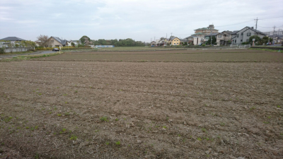 A rice field in mid-March (Onozaki, Tsukuba)