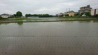 Filled with freshly transsplanted rice stalks (May 7, 2018)